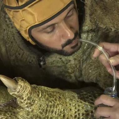 """ماذا يشرب رامز جلال قبل ارتدائه رأس """"السحلية""""؟"""