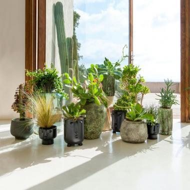 أوعية أنيقة للنباتات تبدّل للأجمل ديكور بيتك في العيد