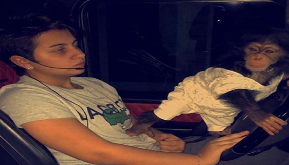 نجمة عربية تستعين بقردتها لقيادة سيارتها